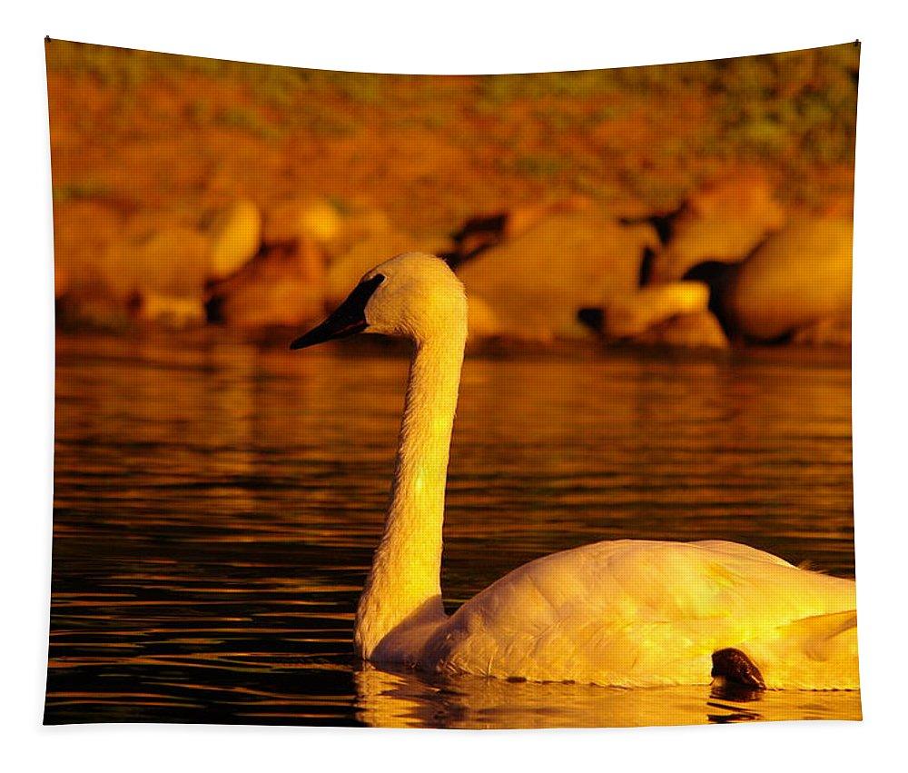 Bird Tapestry featuring the photograph Swan Near Sundown by Jeff Swan