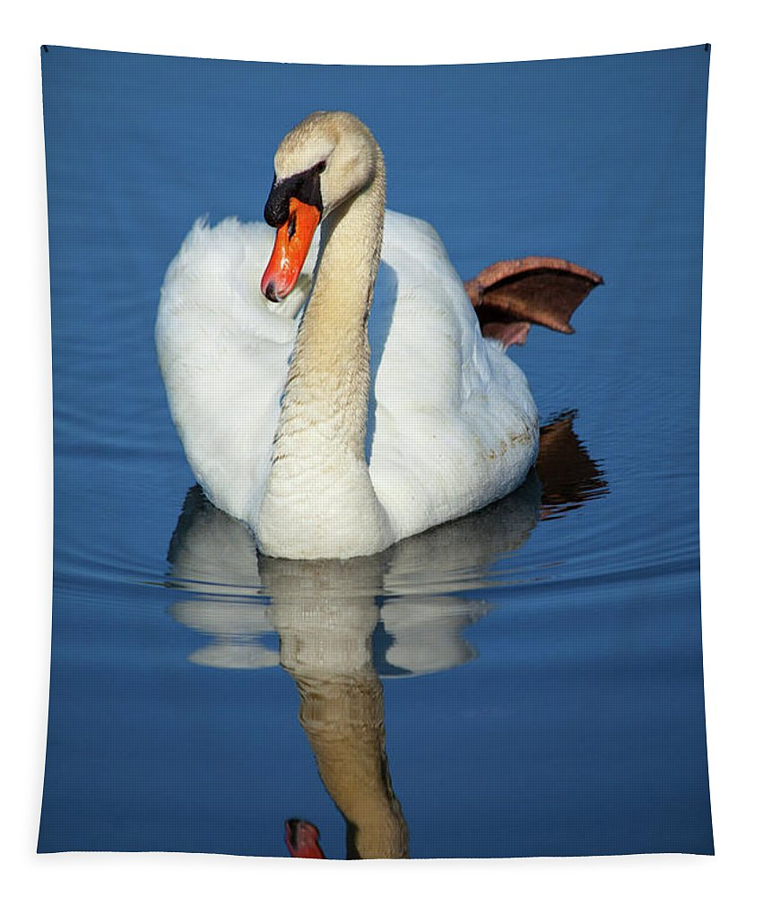 Swan Tapestry featuring the photograph Swan Reflection by Karol Livote