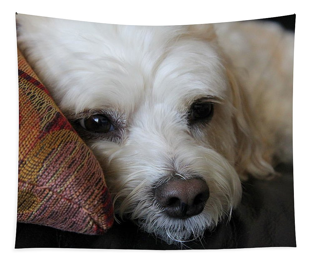 Canine Tapestry featuring the photograph Sweet Baby Girl by Fiona Kennard