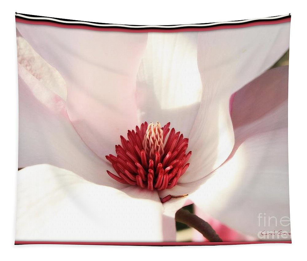 Magnolia Tapestry featuring the photograph Sweet Magnolia by Carol Groenen