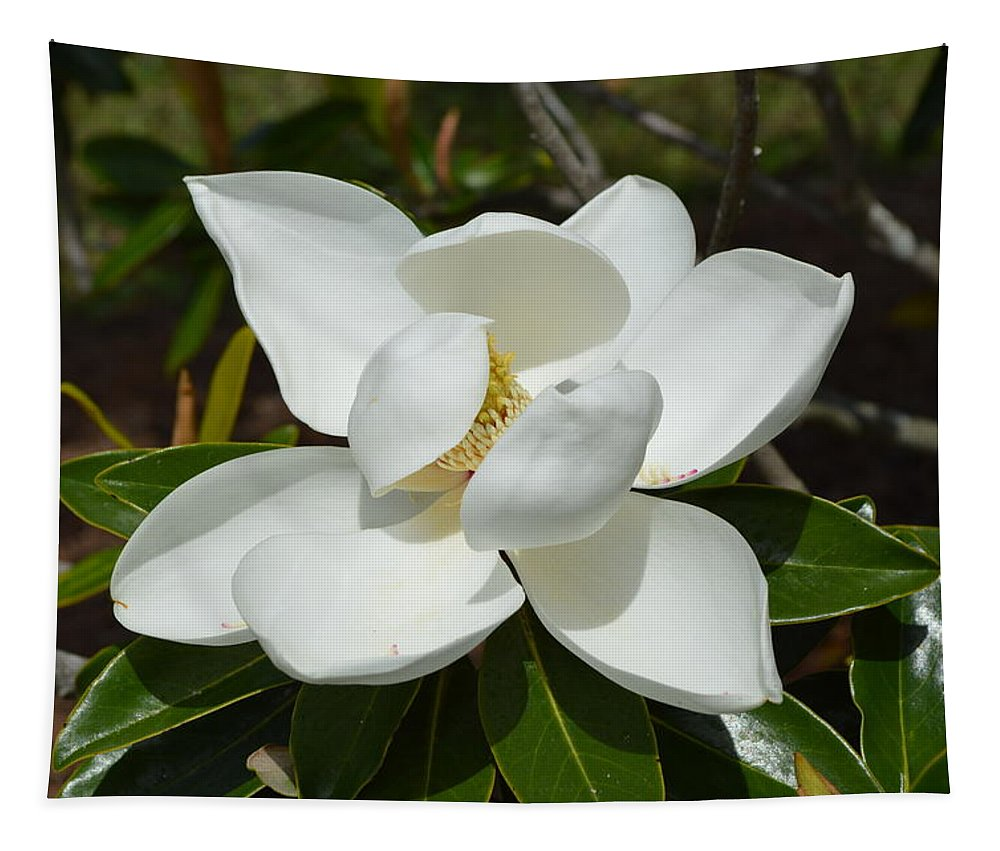 Magnolia Tapestry featuring the photograph Sweet Magnolia by Linda Covino