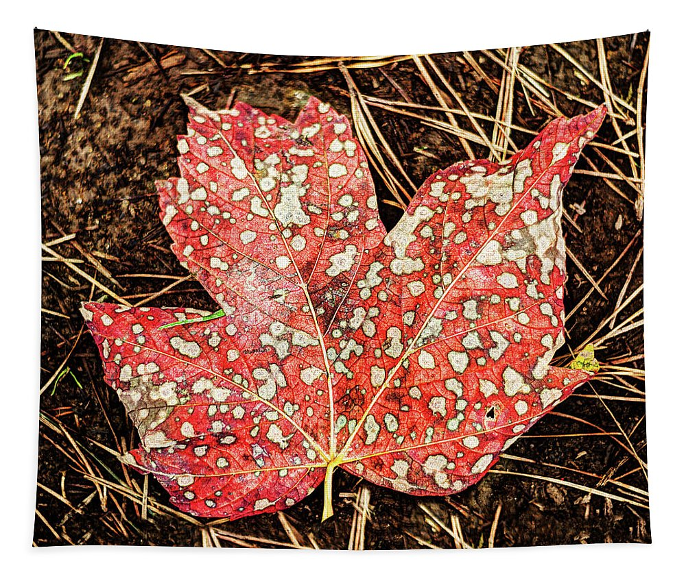Acer Pseudoplatanus Tapestry featuring the photograph sycamore maple Autumn leaf by Weston Westmoreland