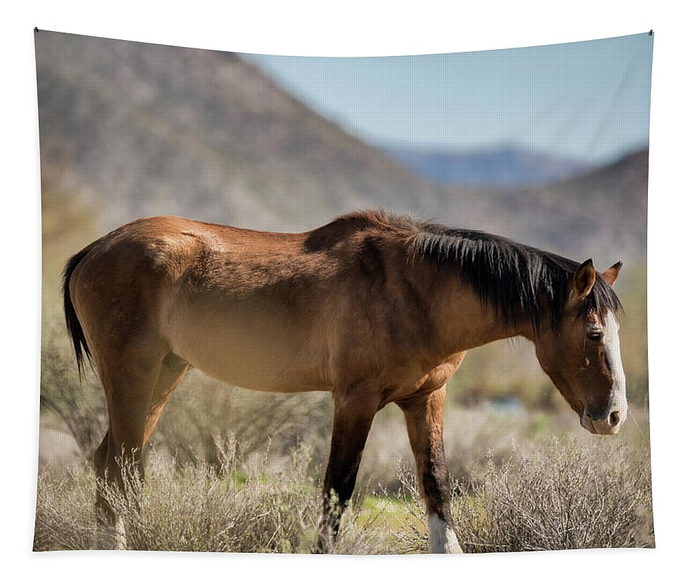 Wild Horse Tapestry featuring the photograph Take A Walk On The Wildside by Saija Lehtonen