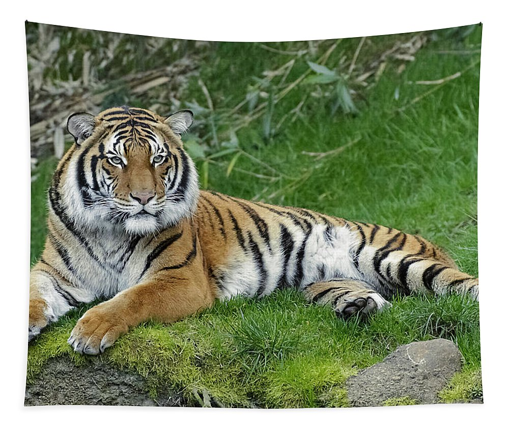 Takin It Easy Tiger Tapestry featuring the photograph Takin It Easy Tiger by Wes and Dotty Weber