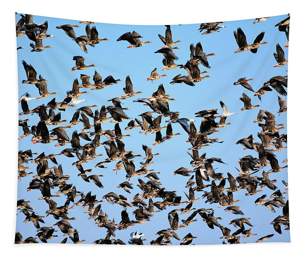 Geese Tapestry featuring the photograph Taking Flight 2 by Bonfire Photography