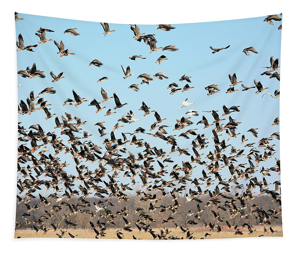 Geese Tapestry featuring the photograph Taking Flight 3 by Bonfire Photography