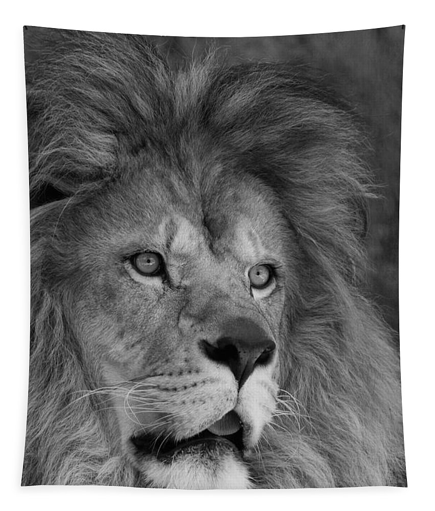 Lion Tapestry featuring the photograph Tango #2 Black And White by Judy Whitton