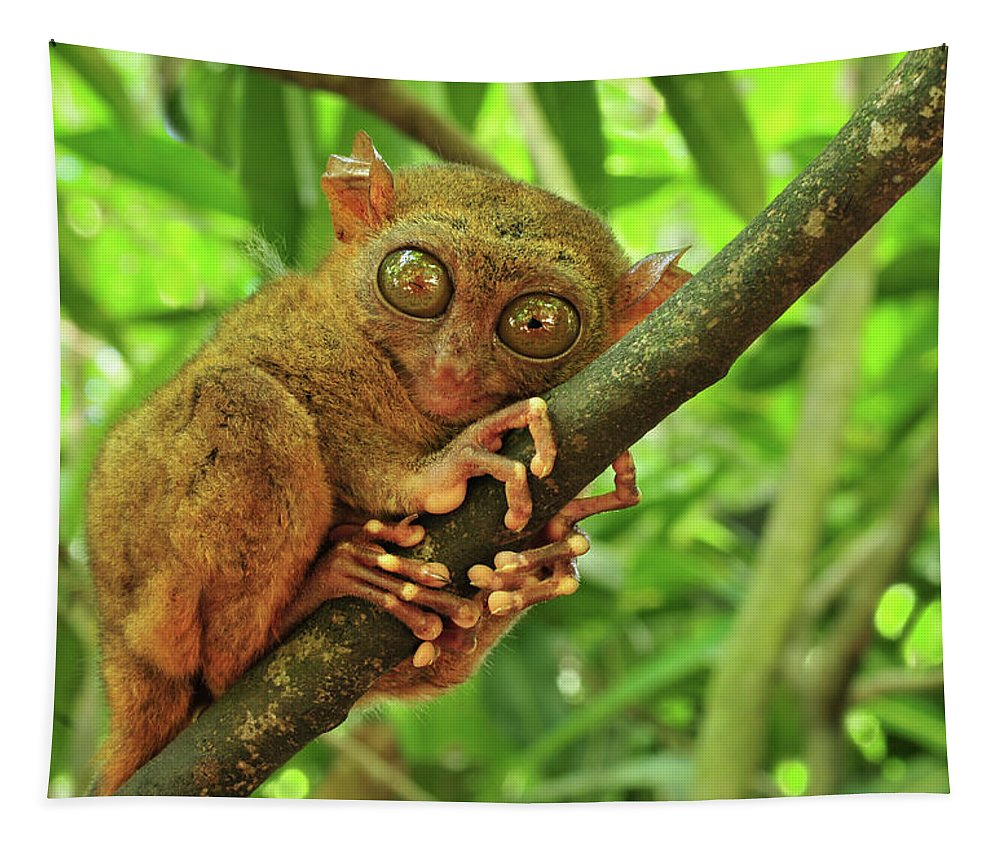 Philippines Tapestry featuring the photograph Tarsier by Edwin Verin