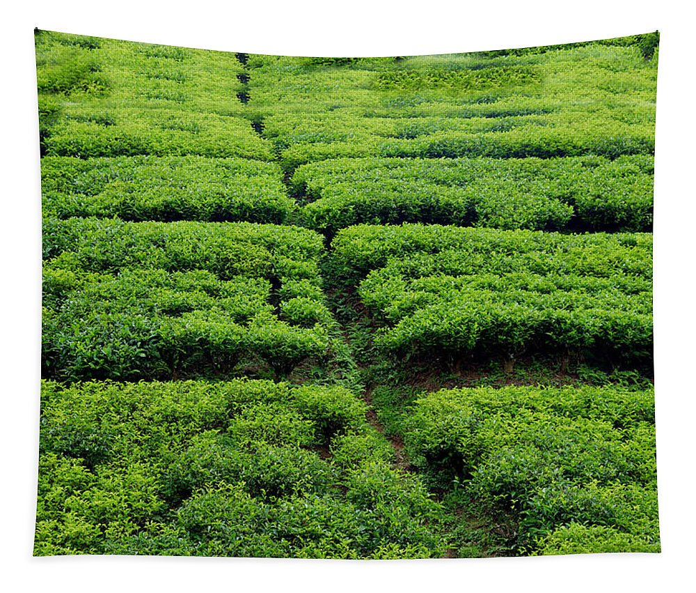 Tea Tapestry featuring the photograph Tea Garden View by Nilu Mishra