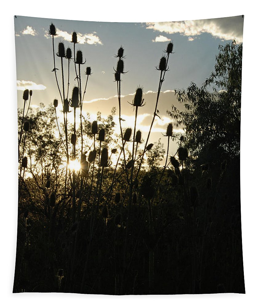 Gold Tapestry featuring the photograph Teasel Sunset Glow by Katherine Nutt