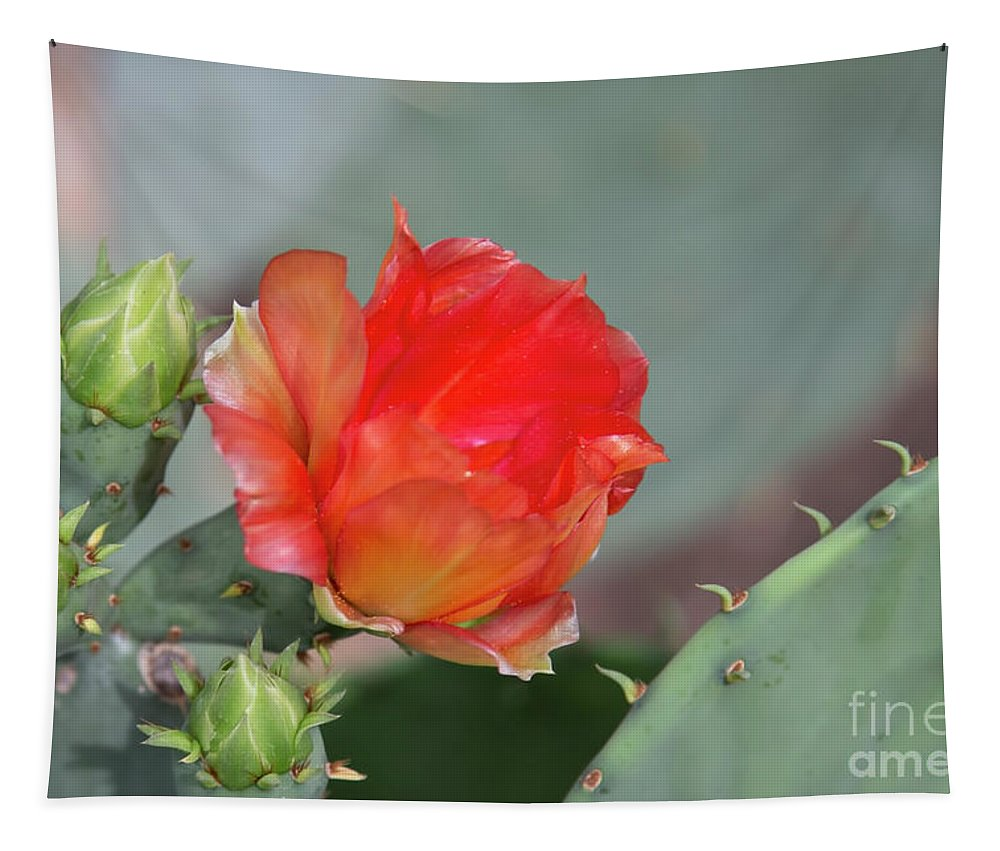 Cactus Flower Tapestry featuring the photograph Texas Pricklypear by Elisabeth Lucas