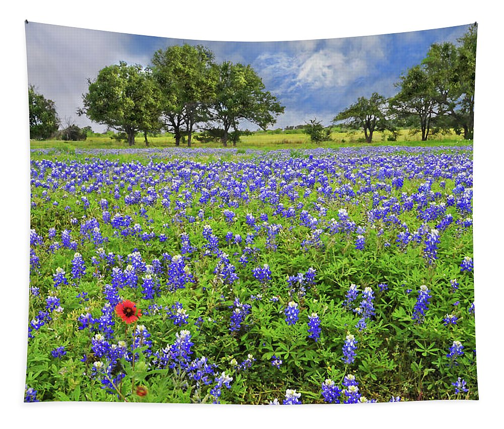 Wildflowers Tapestry featuring the photograph Texas Spring by Lynn Bauer