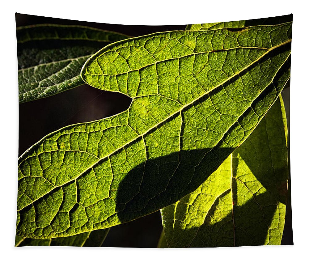 Leaf Tapestry featuring the photograph Textured Glow by Christopher Holmes