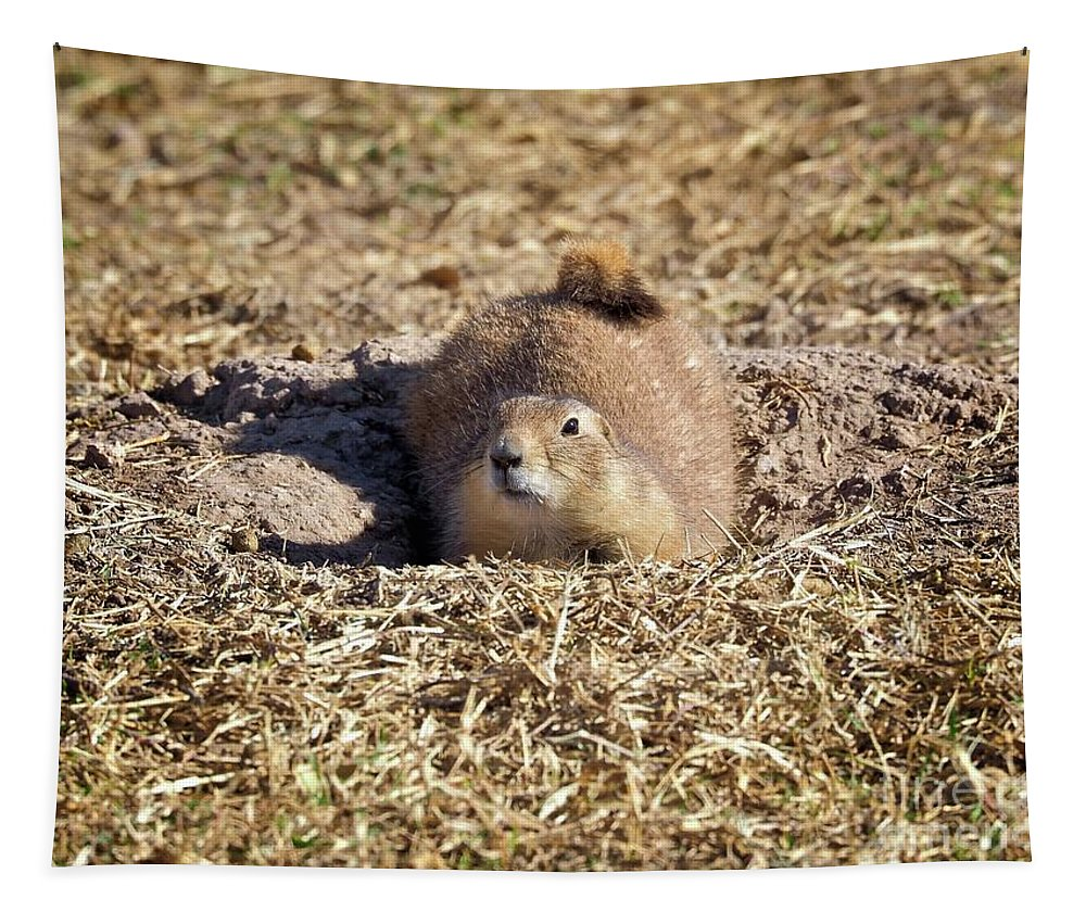 Black-tailed Prairie Dog Tapestry featuring the photograph The Amazing Black-tailed Prairie Dog by Gary Richards