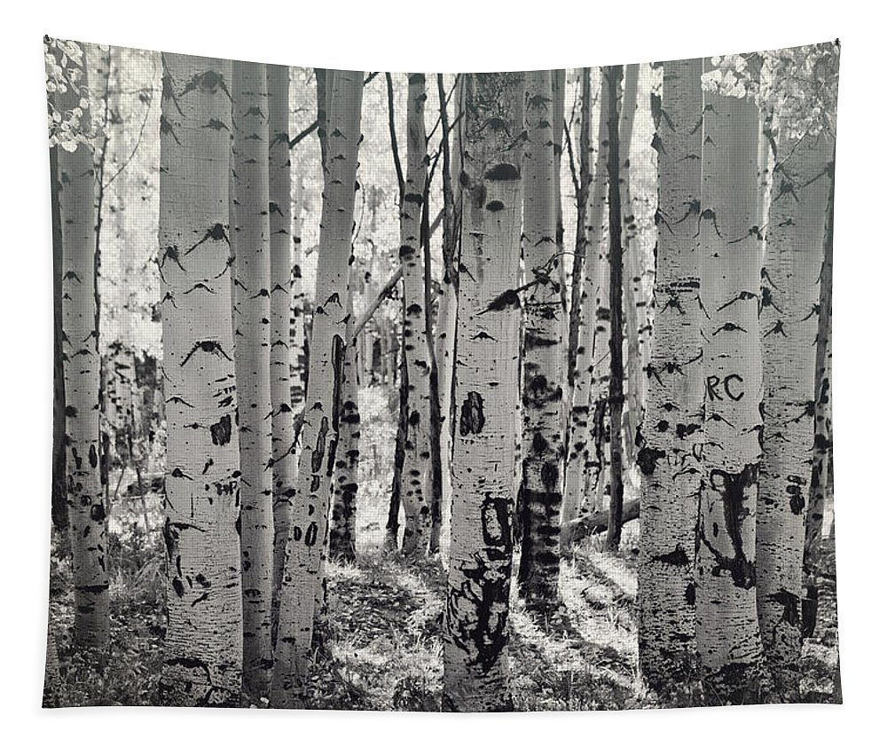 Aspen Trees Tapestry featuring the photograph The Aspen Forest In Black And White by Saija Lehtonen