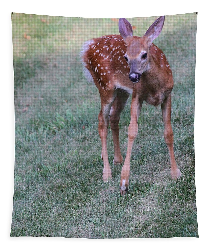 Deer Tapestry featuring the photograph The Bambi Stance by Karol Livote