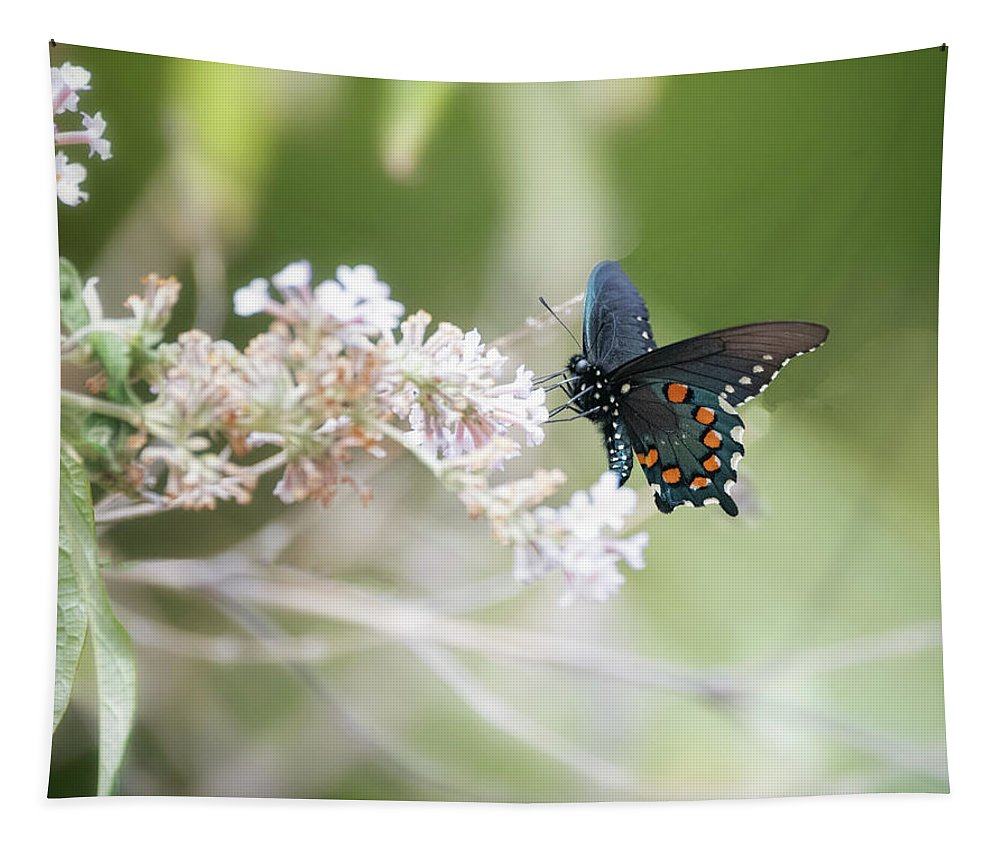 Blue Swallowtail Butterfly Tapestry featuring the photograph The Beauty Of Butterflies by Saija Lehtonen