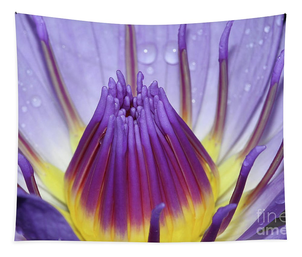Royal Purple Water Lily Tapestry featuring the photograph The Birth Of Beauty #2 by Judy Whitton