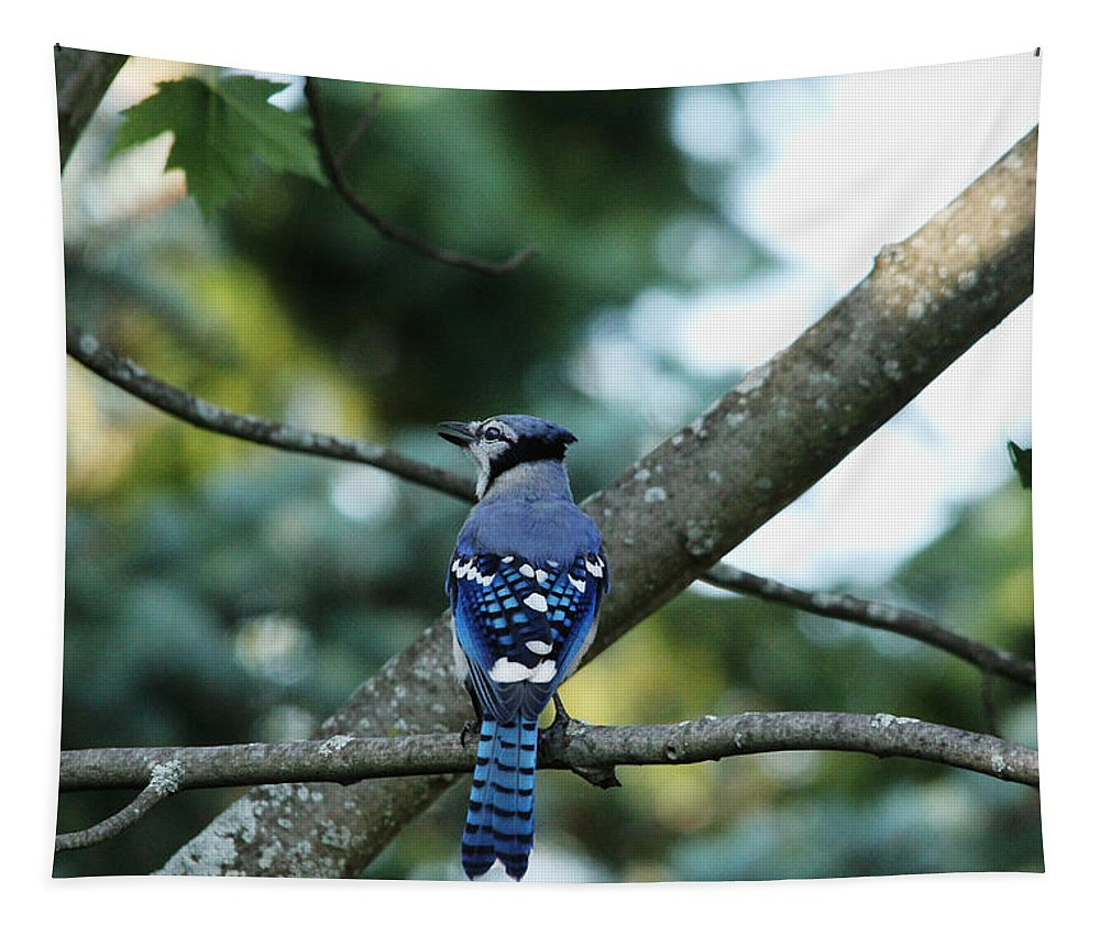 Blue Jay Tapestry featuring the photograph The Blues Song by Debbie Oppermann