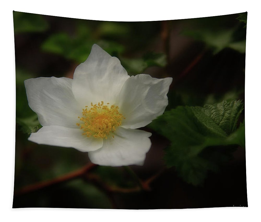 Boulder Tapestry featuring the photograph The Boulder Raspberry Flower by Brian Gustafson