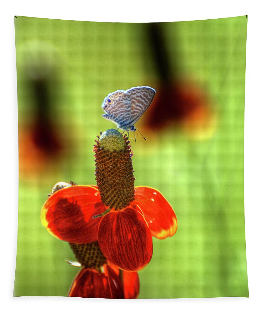 Prairie Coneflower Tapestry featuring the photograph The Butterfly And The Coneflower by Saija Lehtonen