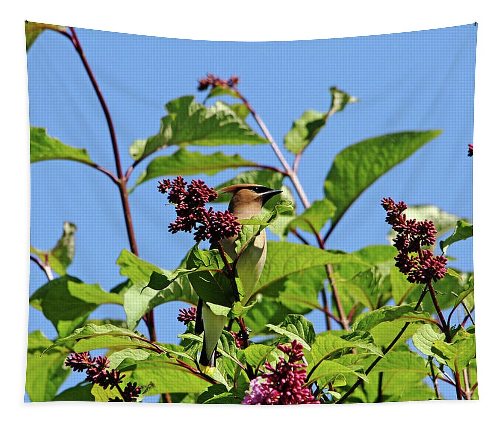 Cedar Waxwing Tapestry featuring the photograph The Cedar In The Lilac by Debbie Oppermann