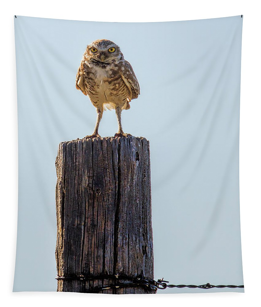Prairie Owl Tapestry featuring the photograph The Chairman Of The Board by Jim Garrison