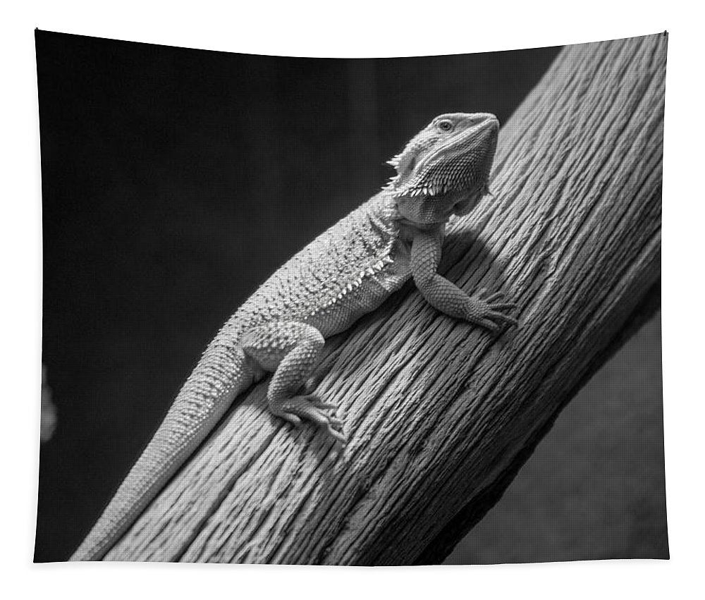Central Bearded Dragon Tapestry featuring the photograph The Climb by Tania Read