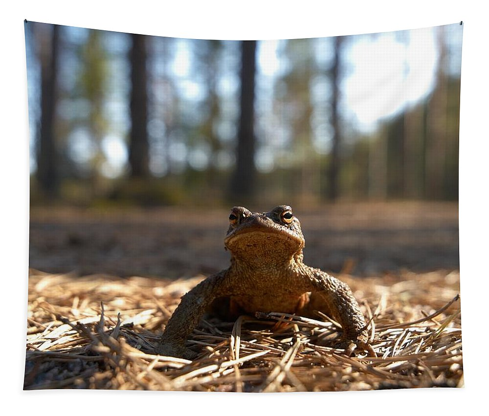 Seitseminen Tapestry featuring the photograph The Common Toad 3 by Jouko Lehto