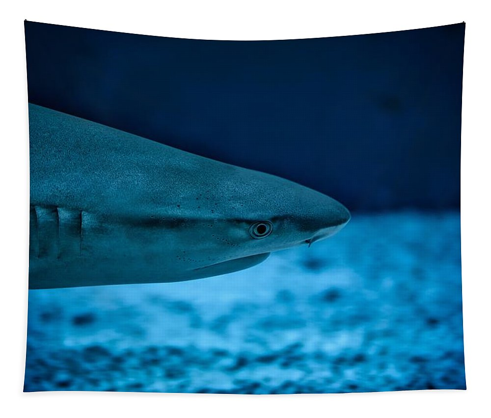 Shark Tapestry featuring the photograph The Constant Search For Food by Florian Klauer