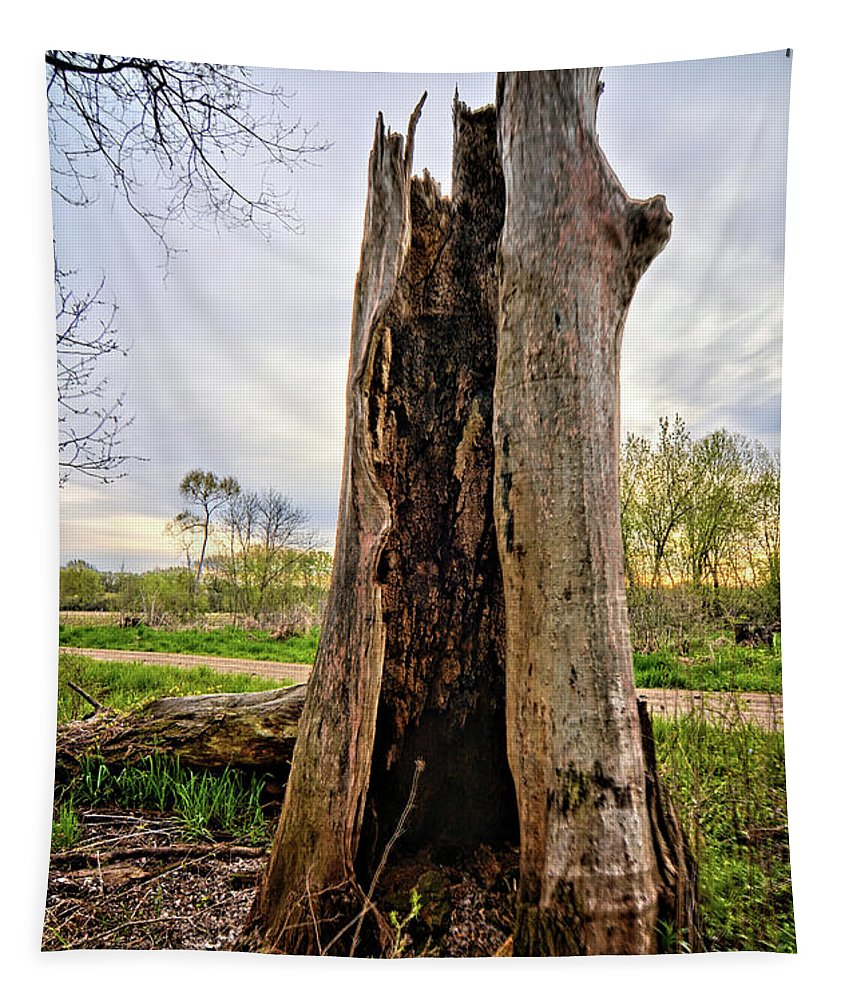 Tree Tapestry featuring the photograph The Cottonwood by Bonfire Photography