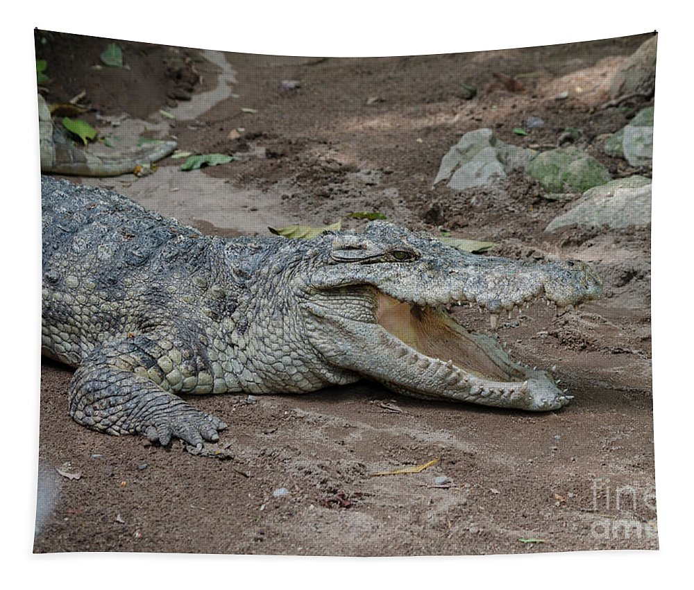 Michelle Meenawong Tapestry featuring the photograph The Croc by Michelle Meenawong