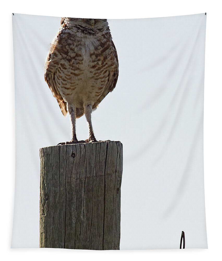Prairie Owl Tapestry featuring the photograph The Di by Jim Garrison