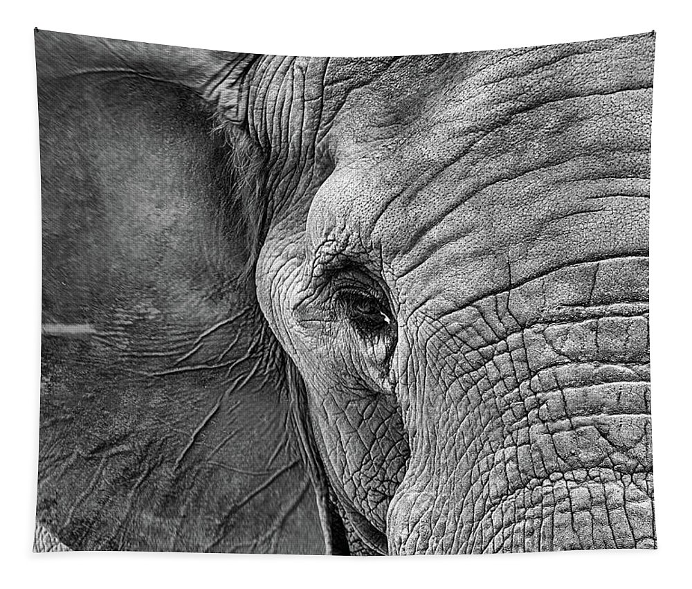 Elephant Tapestry featuring the photograph The Elephant In Black And White by JC Findley