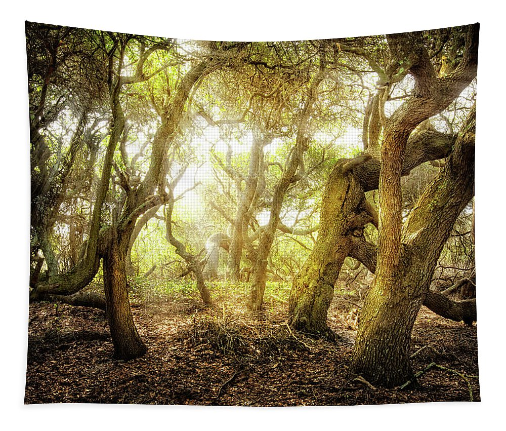 Florida Tapestry featuring the photograph The Giant Awakens by Debra and Dave Vanderlaan