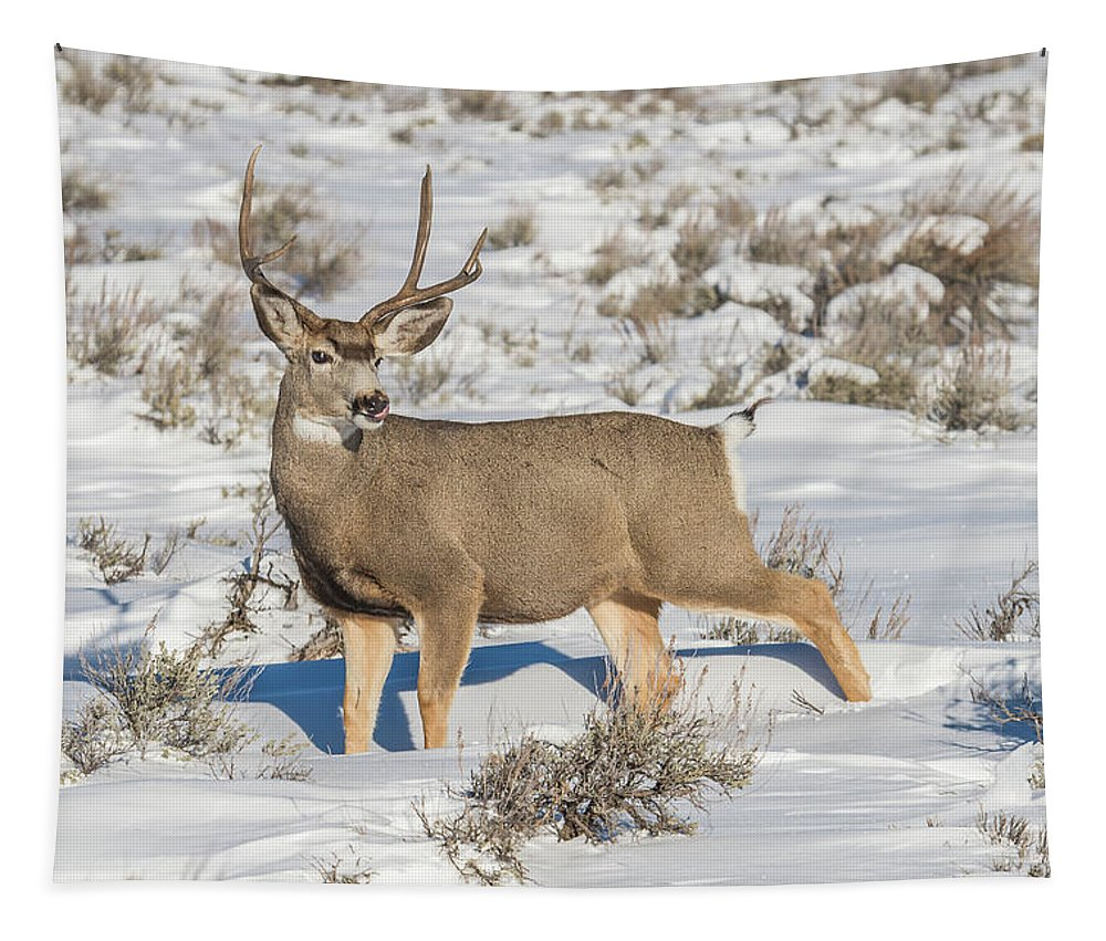 Deer Tapestry featuring the photograph The Gtnp Mule Deer Buck by Yeates Photography