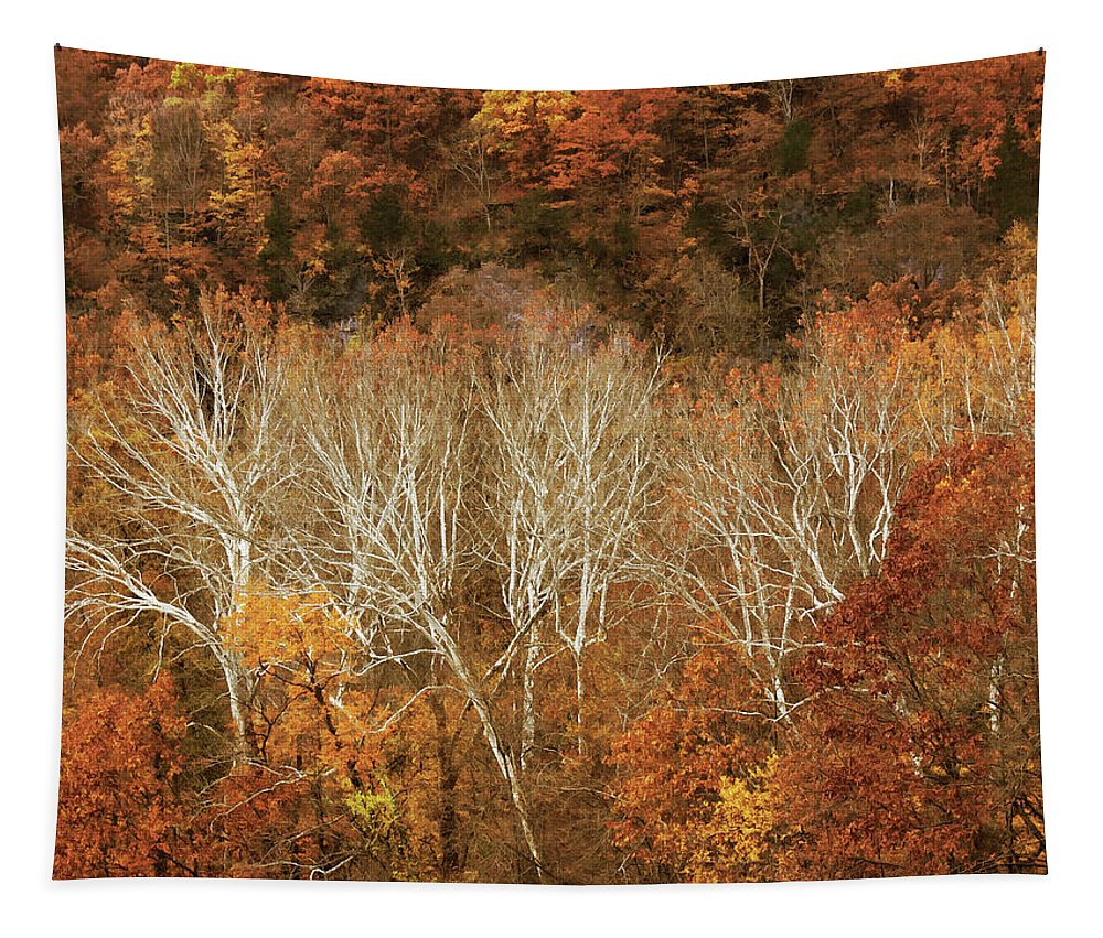 Hill Tapestry featuring the photograph The Hills In Autumn by Mitch Spence