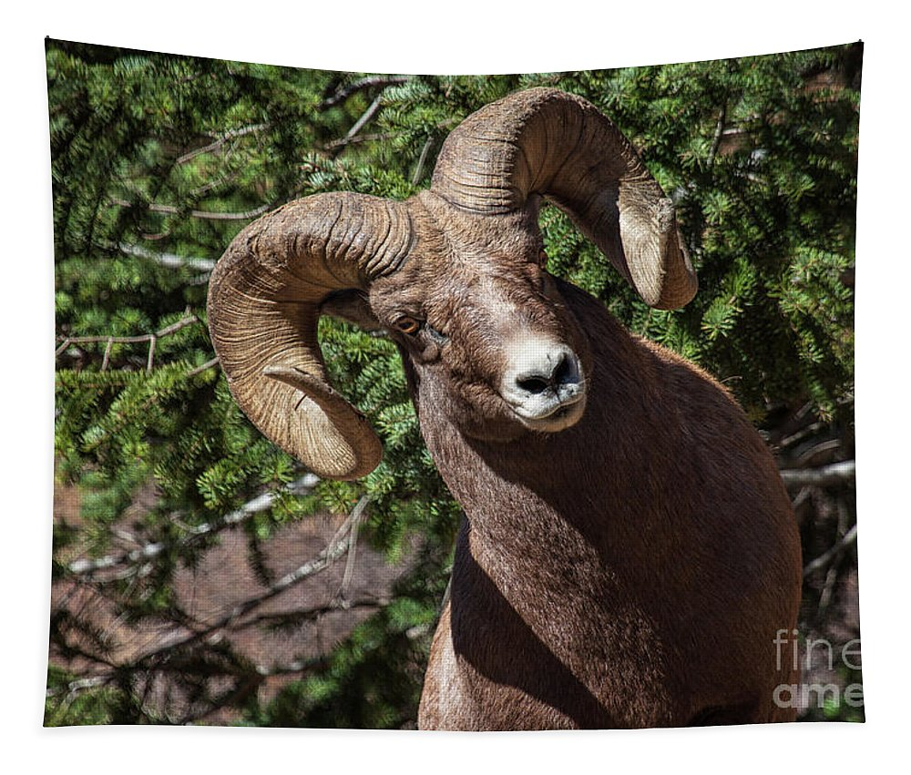 Bighorn Sheep Tapestry featuring the photograph The Investigation by Jim Garrison