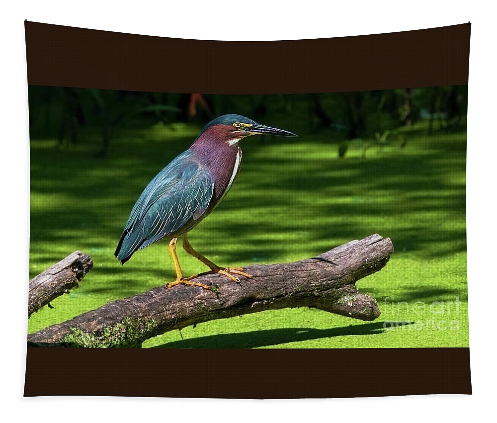 Green Heron Tapestry featuring the photograph The King Of The Log.... by Nina Stavlund