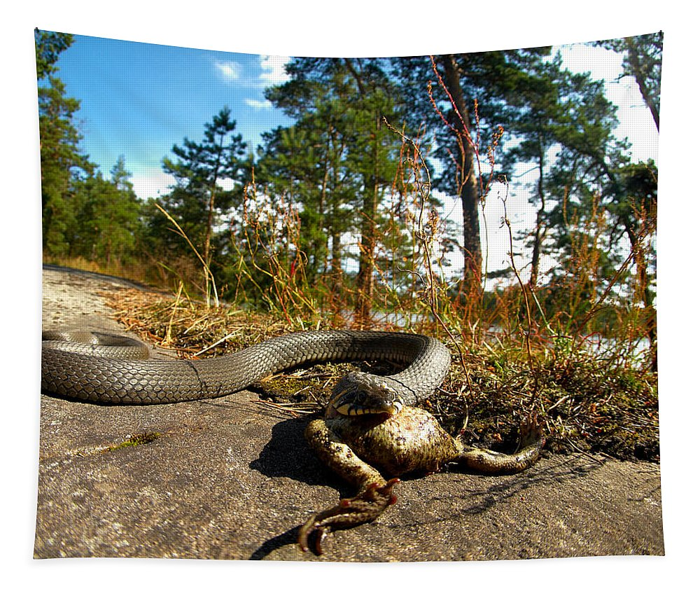 Lehtokukka Tapestry featuring the photograph The Lunch Of Grass Snake by Jouko Lehto