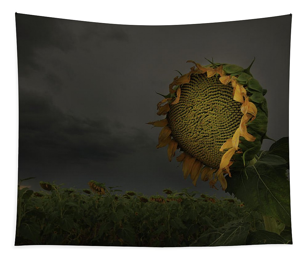 Sunflower Tapestry featuring the photograph A Sign Of Hope Among A Crowd Of Despair by Brian Gustafson