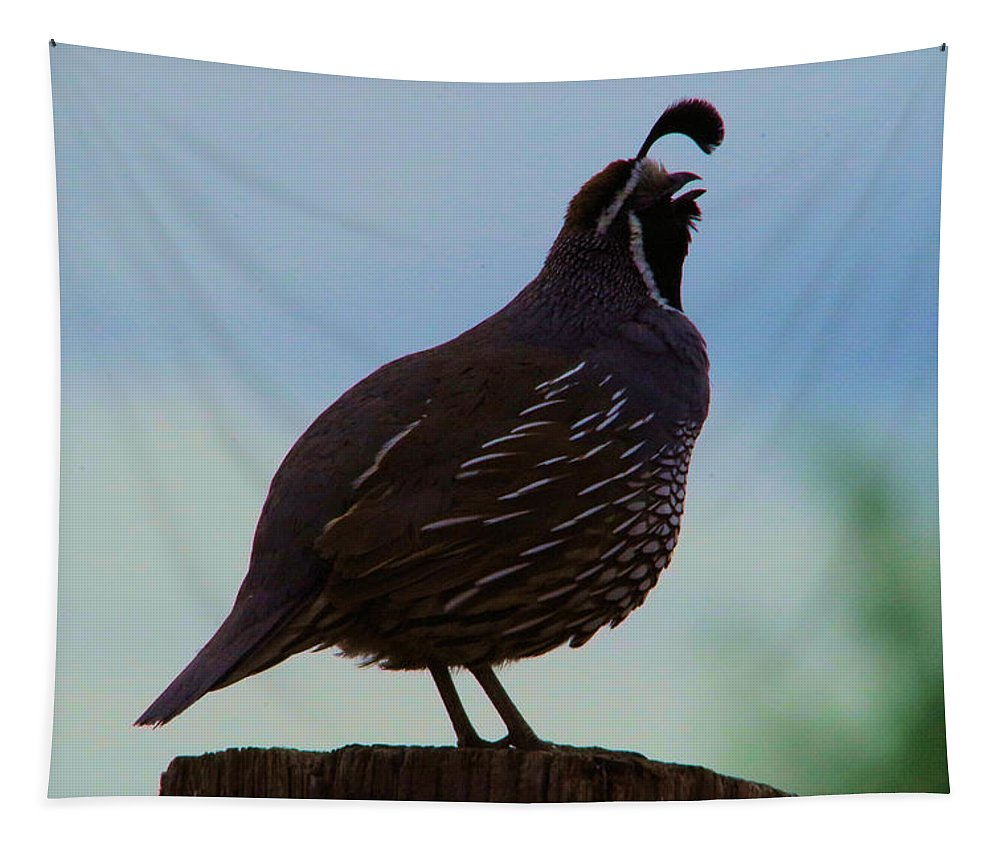 Bird Tapestry featuring the photograph The Morning Call by Jeff Swan