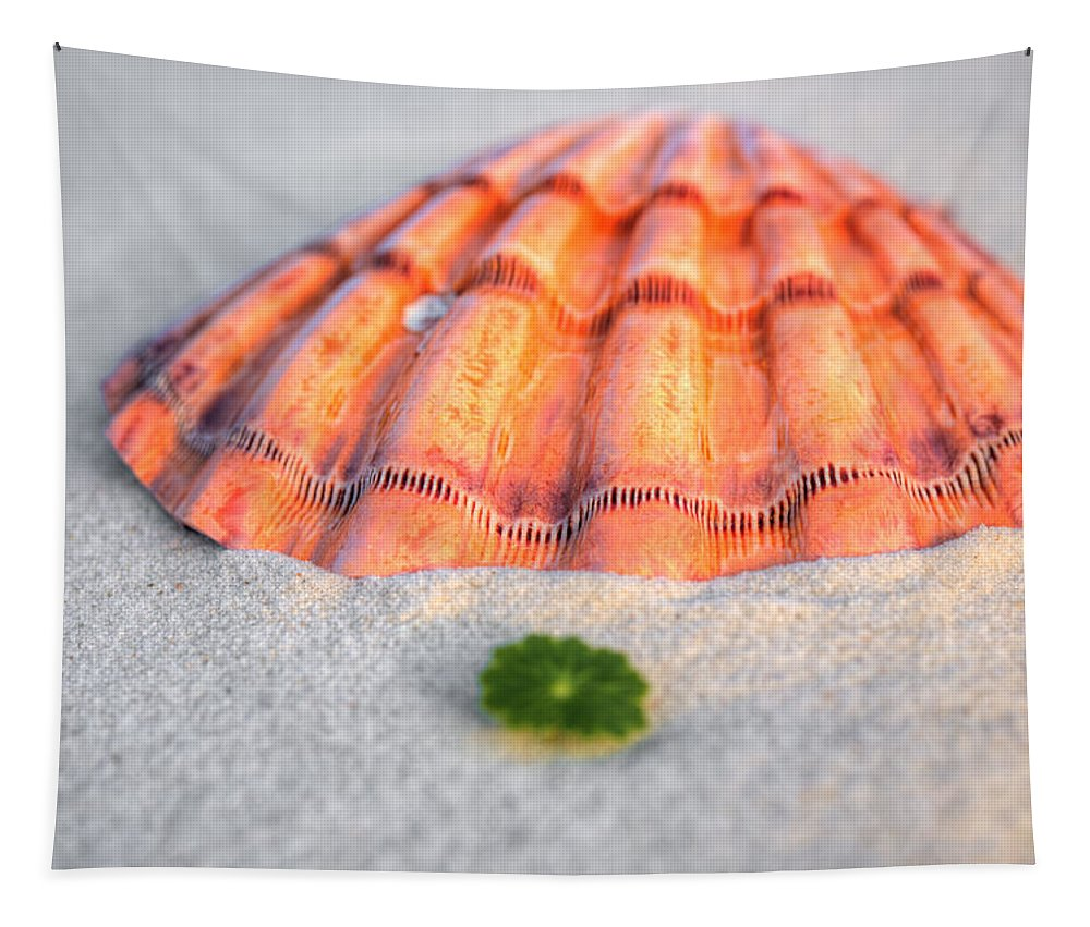 Orange Beach Tapestry featuring the photograph The Orange Scallop by JC Findley