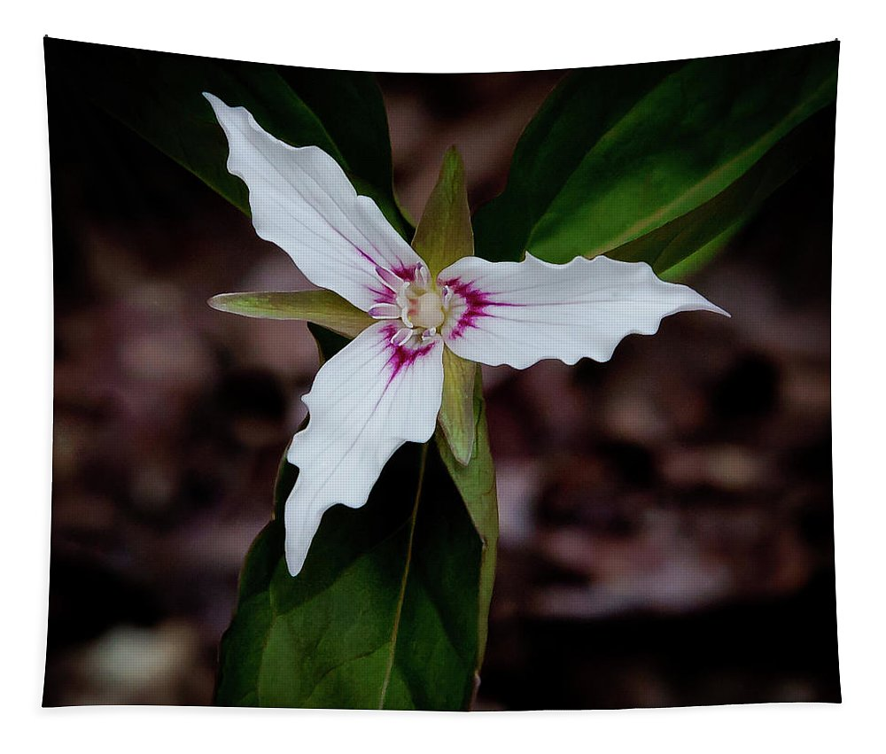 The Painted Trillium Tapestry featuring the photograph The Painted Trillium by David Patterson