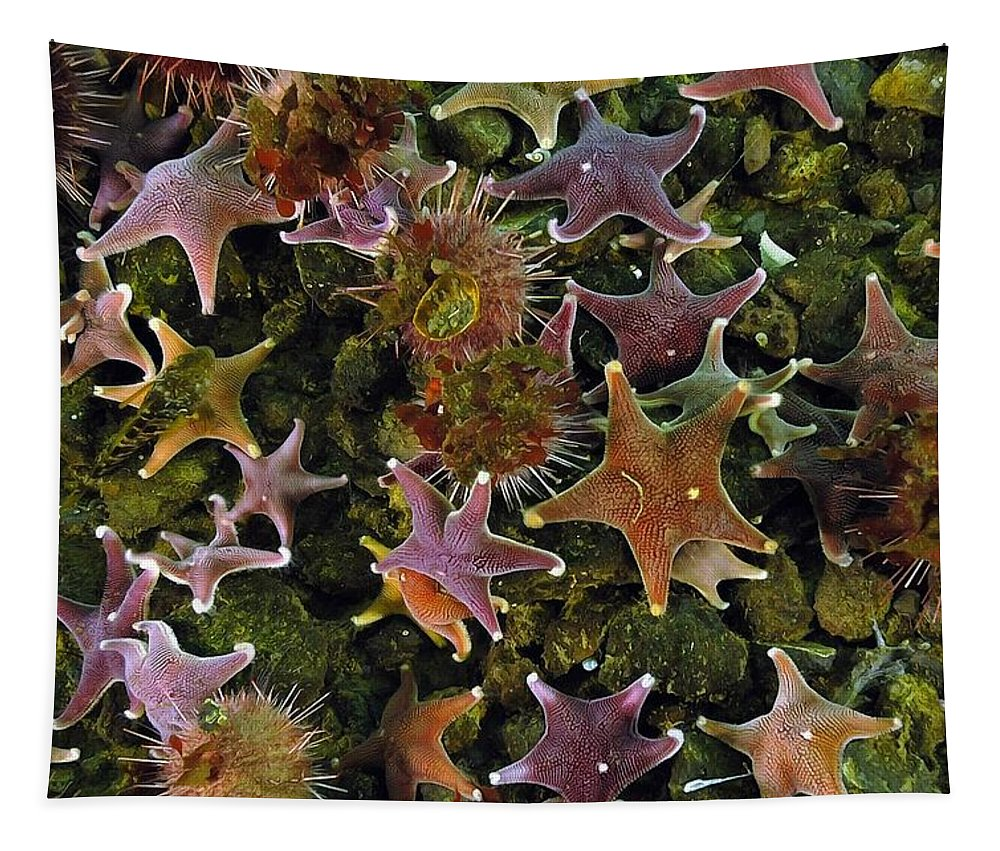 Parade Of Stars Tapestry featuring the photograph The Parade Of Stars by Sergey Lukashin