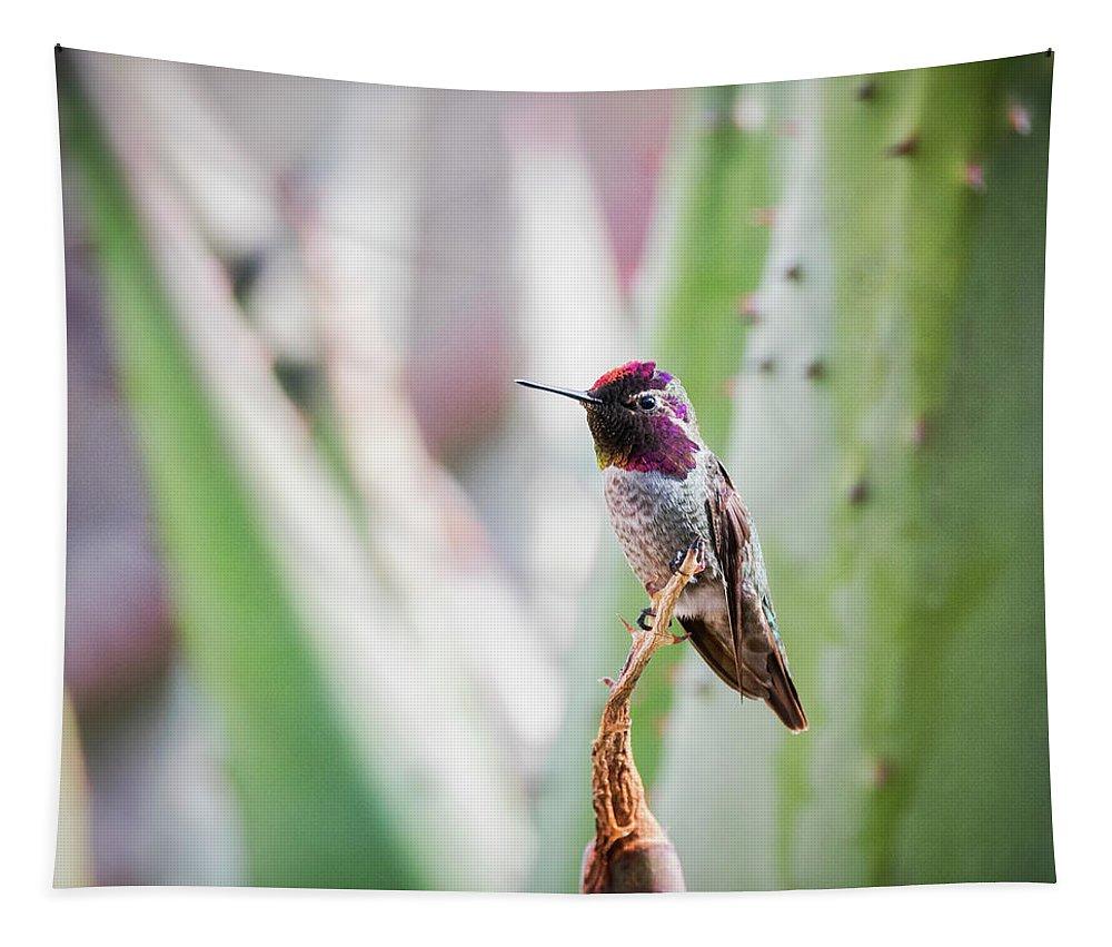 Hummingbird Tapestry featuring the photograph The Perfect Perch by Saija Lehtonen