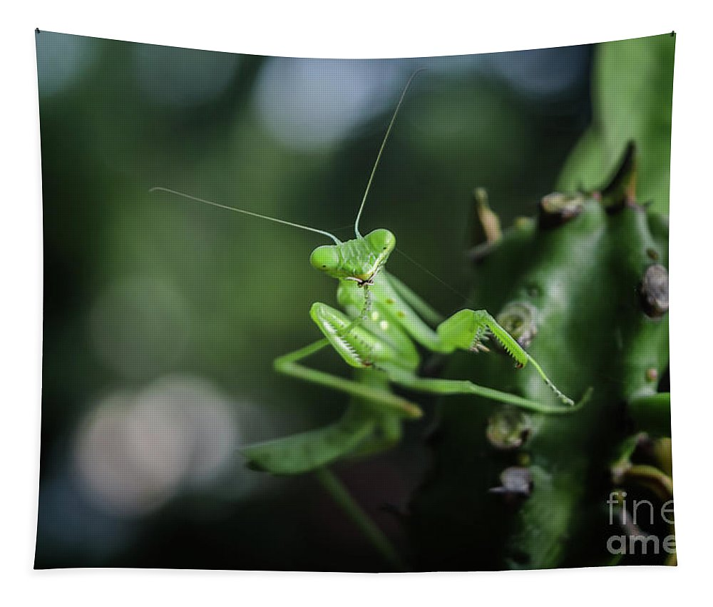 Michelle Meenawong Tapestry featuring the photograph The Praying Mantis by Michelle Meenawong