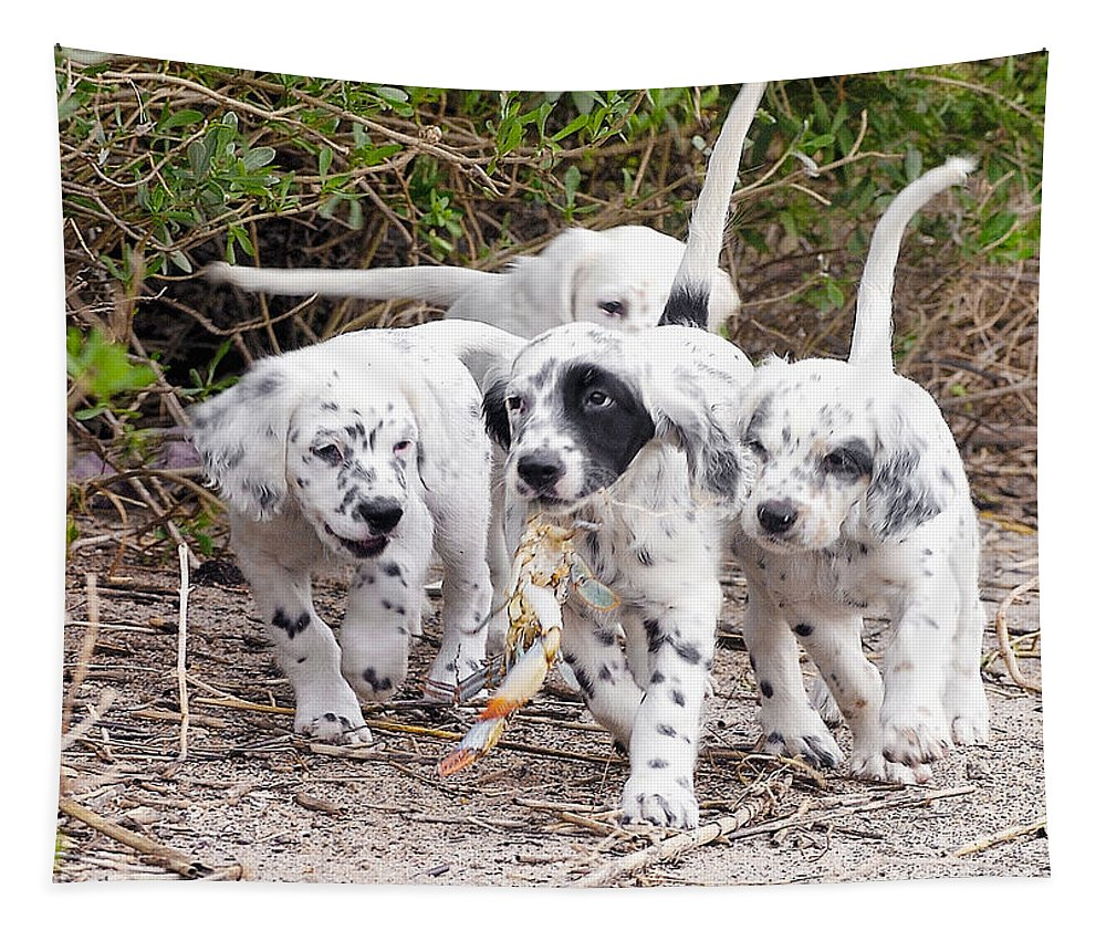 English Setter Tapestry featuring the photograph The Puppy's Prize by Scott Hansen