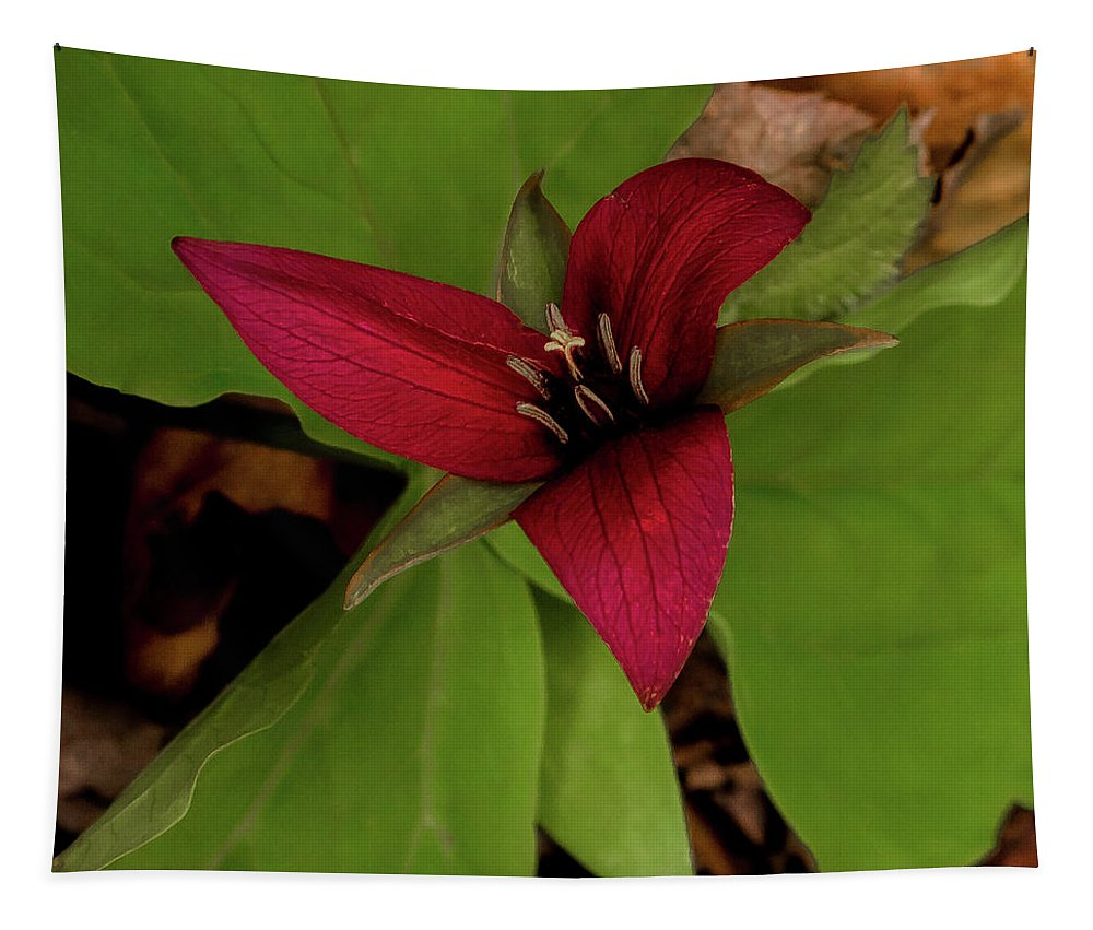 The Red Trillium Tapestry featuring the photograph The Red Trillium by David Patterson