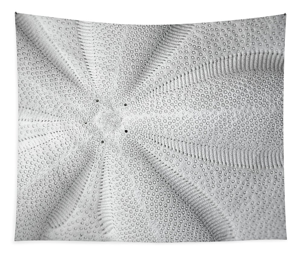 Black And White Tapestry featuring the photograph The Sea Biscuit by JC Findley